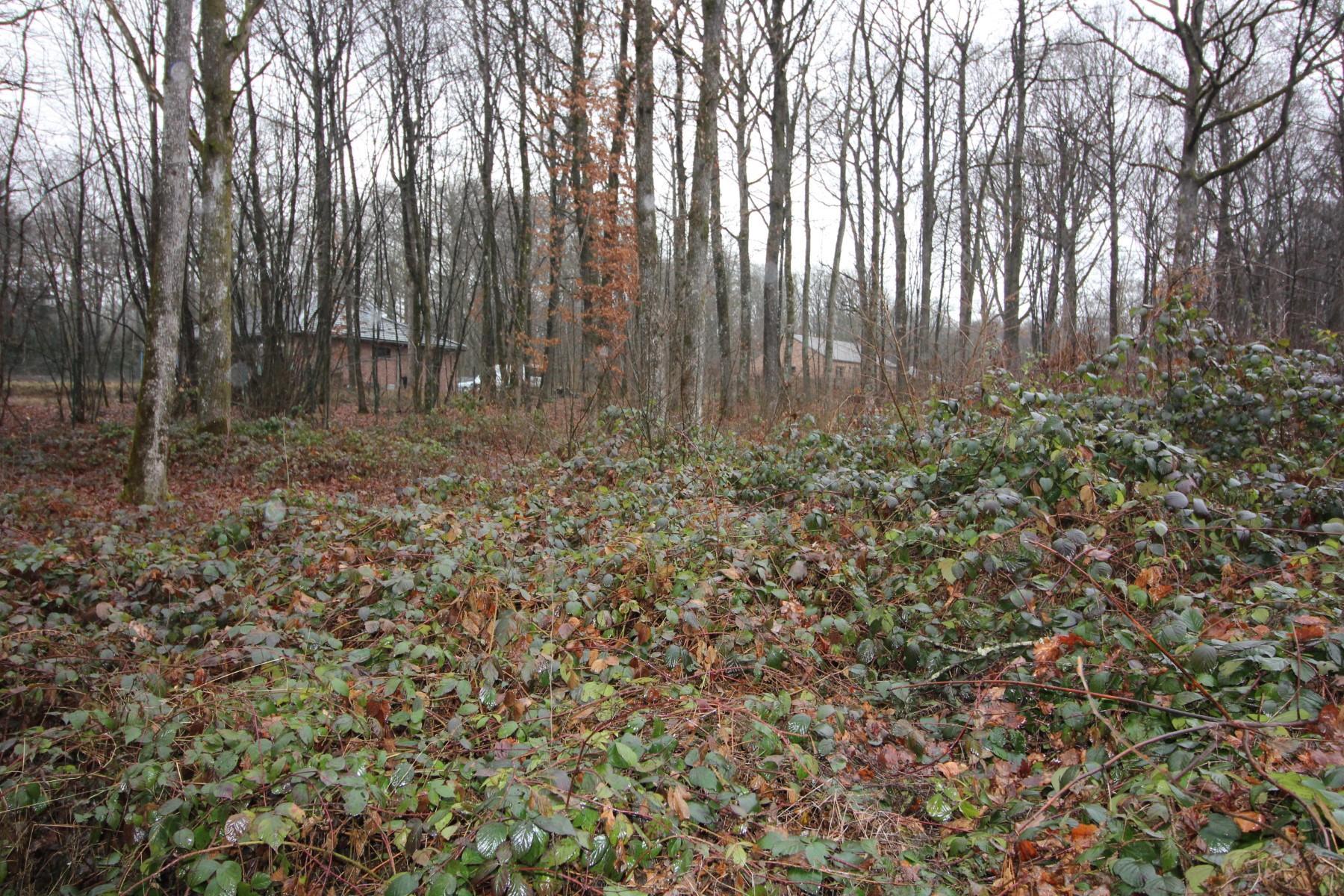 Terrain à bâtir - Philippeville - Roly - #3015406-2