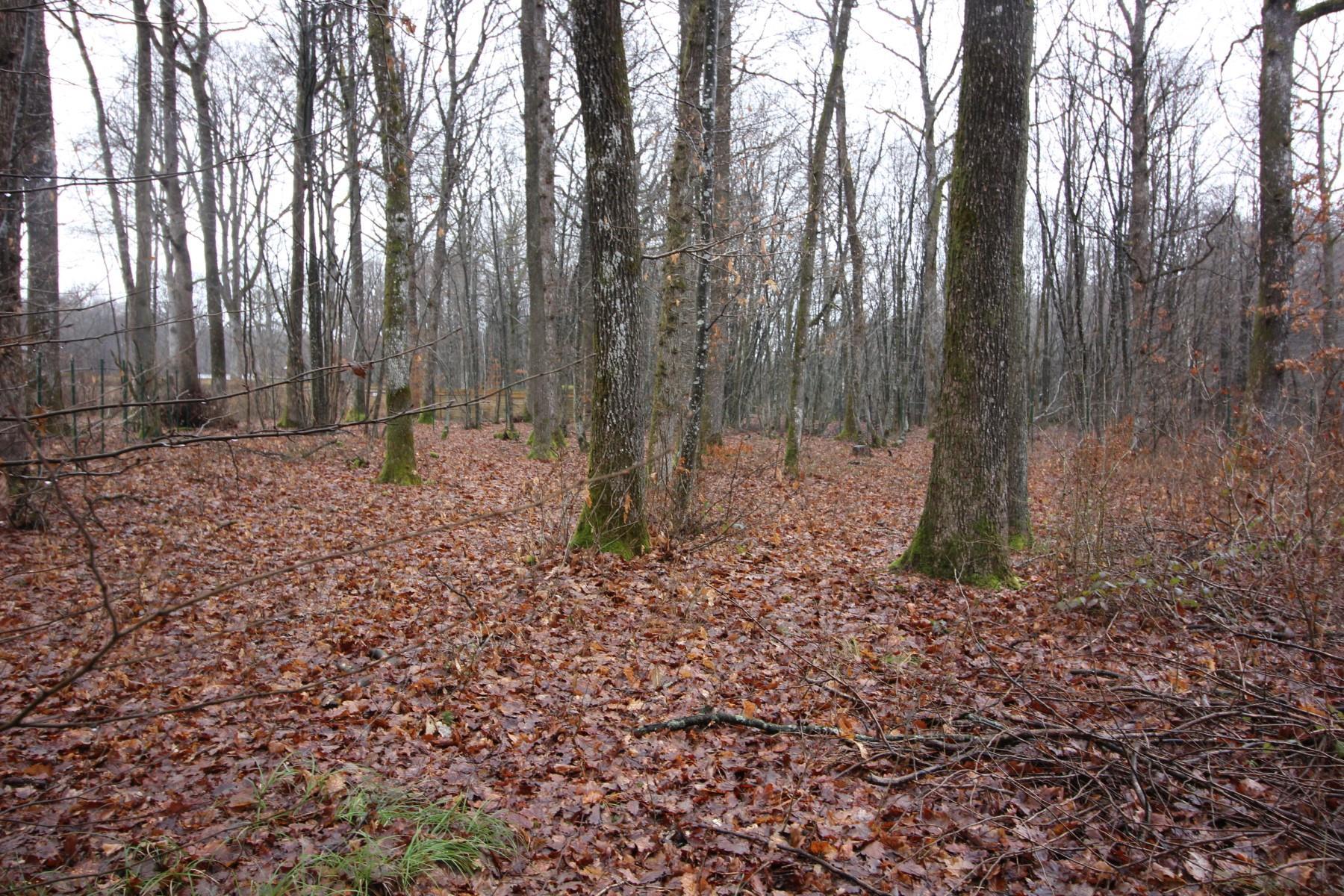 Terrain à bâtir - Philippeville - Roly - #3015406-0